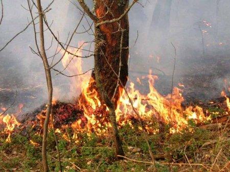 """Северчанин возместит около 95 тыс. рублей ущерба за """"неосторожный"""" поджог леса"""