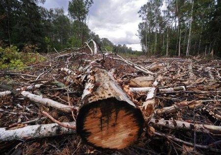 СХК вырубил 48 гектаров леса вокруг себя