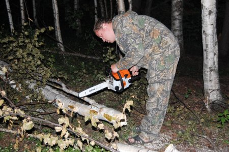 Молодые люди незаконно вырубили деревья, чтобы развести костер