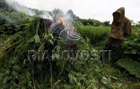 """В июле томские нарокополицейские изъяли 12 кг """"растительных"""" наркотиков"""