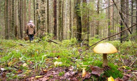 75-летняя женщина ушла за грибами и не вернулась