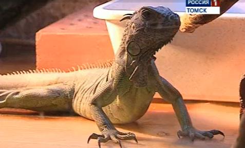 В северском зоопарке посетителей ждет новогодний сюрприз