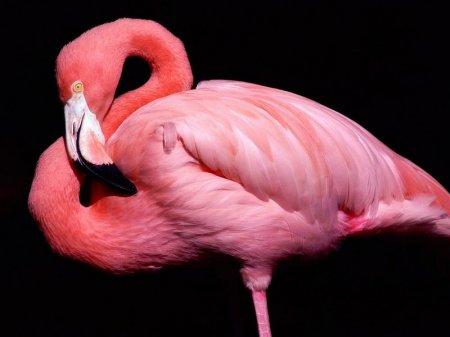 В зоопарке скончался второй найденный фламинго