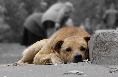 Он-лайн приемная администрации. Хочу открыть приют для бездомных животных!