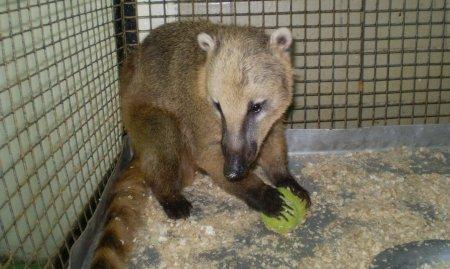 Зоопарк собирает игрушки для зверушек