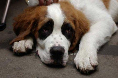 Ветеринарная клиника «Барри» в октябре отметит 20-летие со дня своего основания