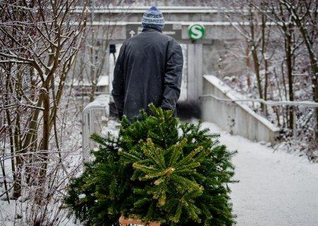Охотникам за новогодними елками грозят серьезные наказания