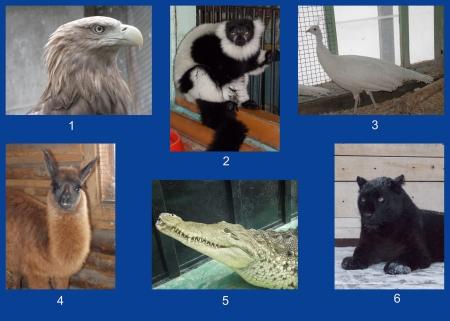 Выбираем Красу северского зоопарка - 2013
