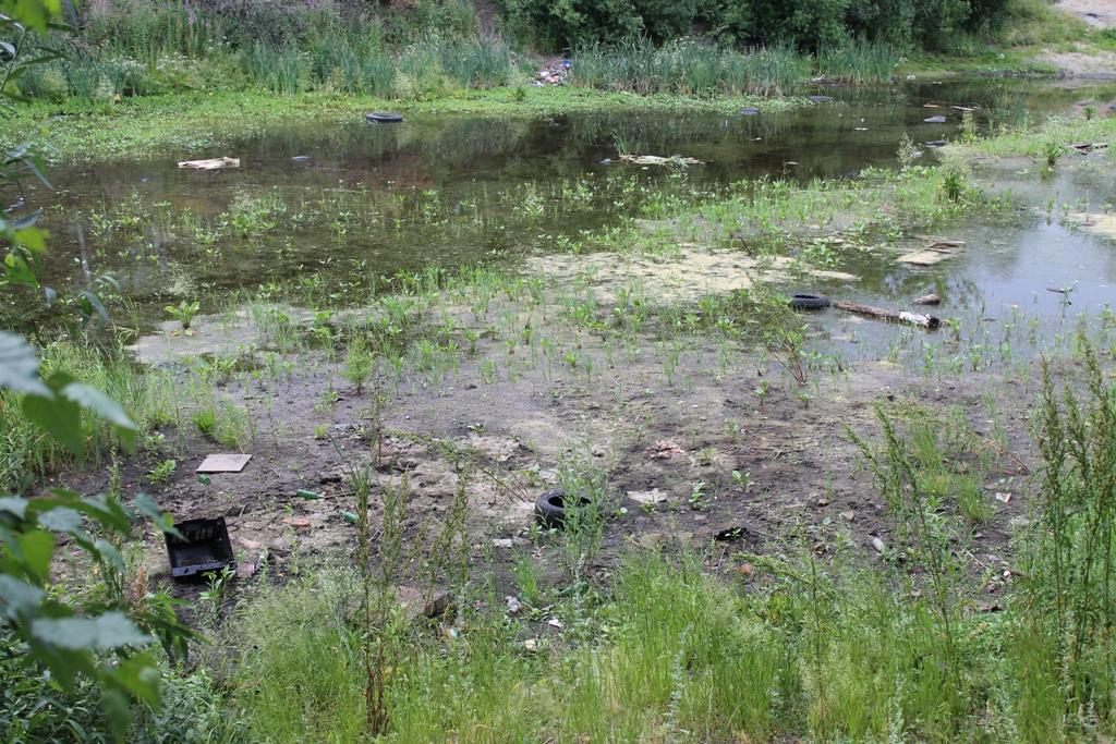 Правда ли очистили пруд на территории бывшего ДОКа?