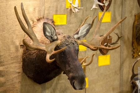 «Главный охотник России» примет участие в выставке «Охота и рыболовство»