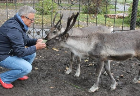Оленихе Берте в зоопарк привезли двух женихов