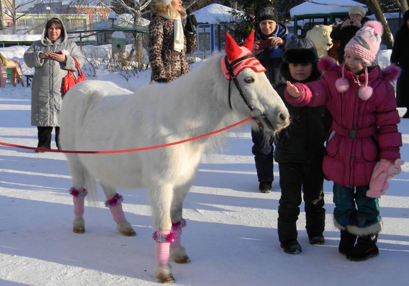 Пони Дося стала символом года в зоопарке