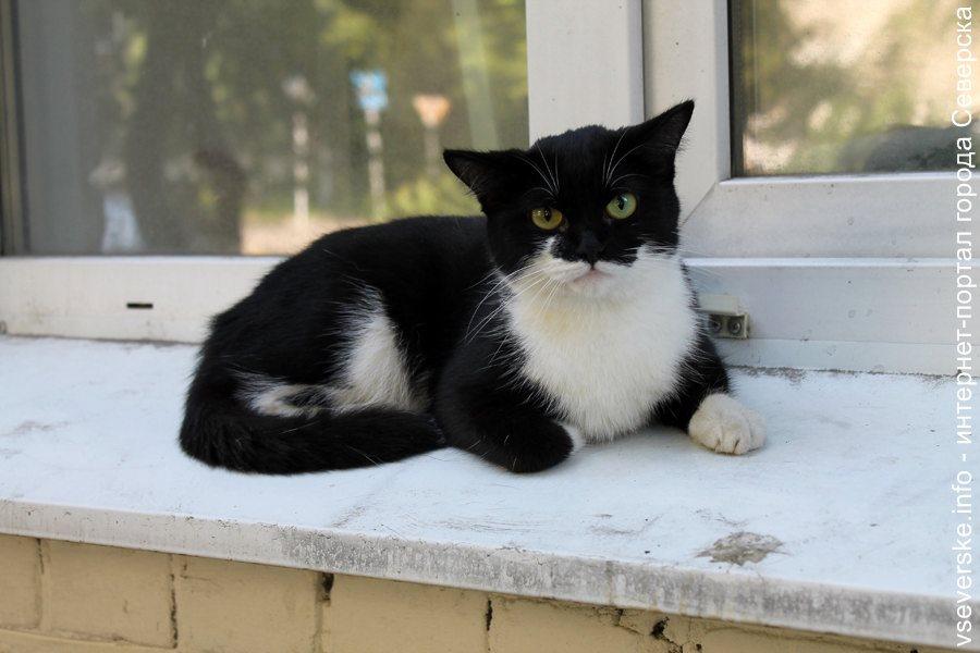 Черный кот ищет своих хозяев
