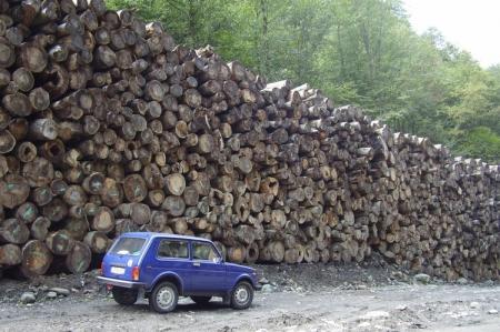 Штрафы за незаконную вырубку лесов увеличатся