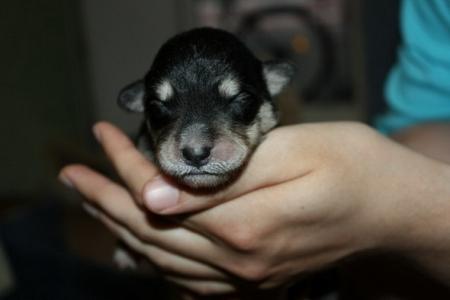 В подъезд выкинули двух новорожденных щенков