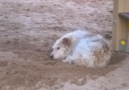 Северчанка обратилась к власти с просьбой ввести программу стерилизации бездомных собак