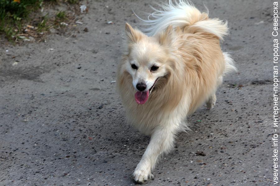 Администрация заплатит почти три миллиона рублей за отлов бездомных собак