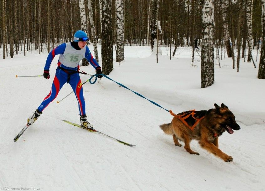 «Биатлон с собаками» собрал участников из разных регионов Сибири