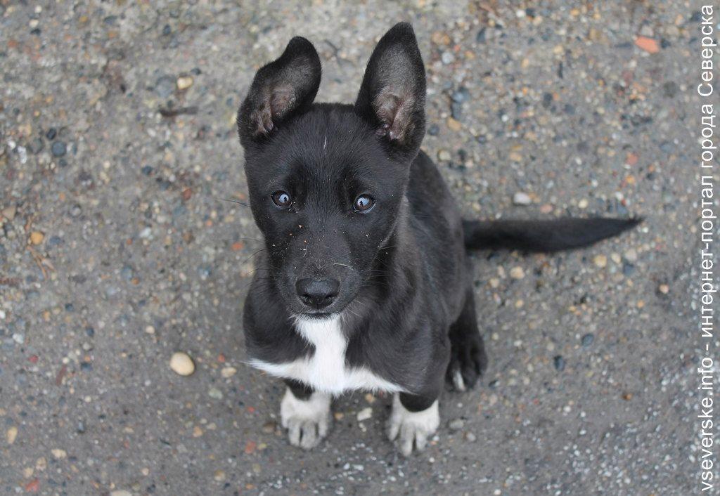 Северская организация займется отловом бездомных собак в Томском районе