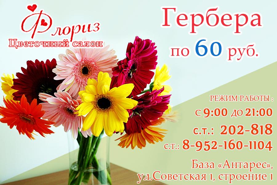 Герберы по 60 рублей