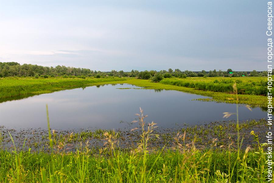 Известны результаты исследования воды в водоемах