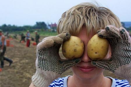 «Социальный картофель» посадят 126 семей из Томска и Северска