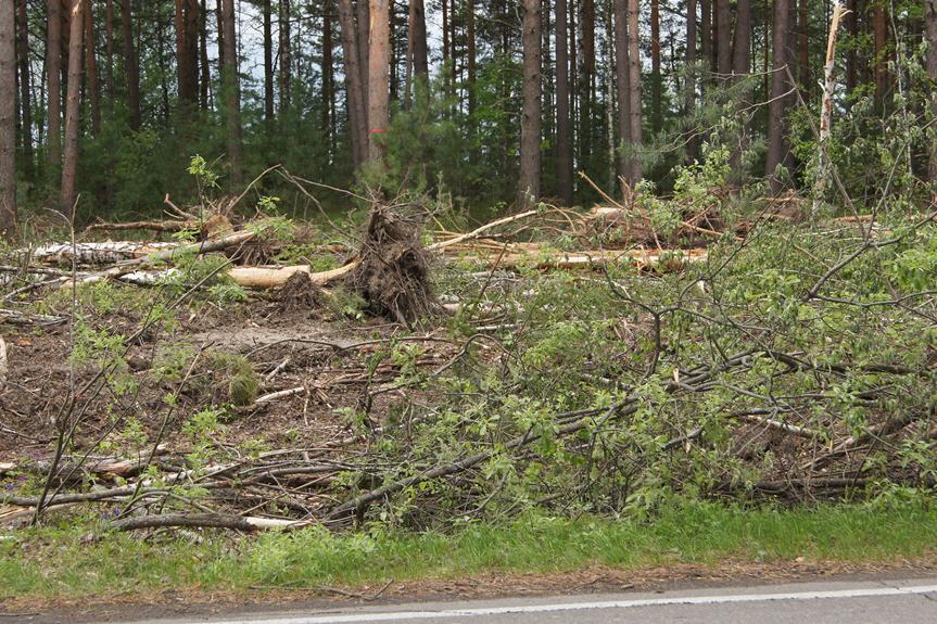 Прокуратура возбудила шесть уголовных дел по незаконной вырубке леса