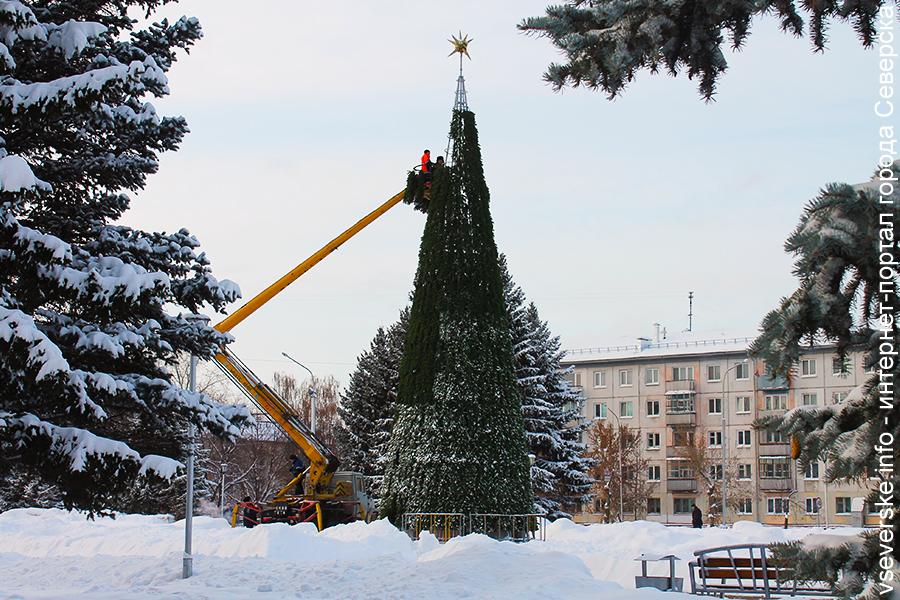 В Северске началась установка новогодних елей