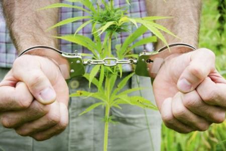 10,5 лет проведет в тюрьме северчанин, который выращивал в гараже коноплю