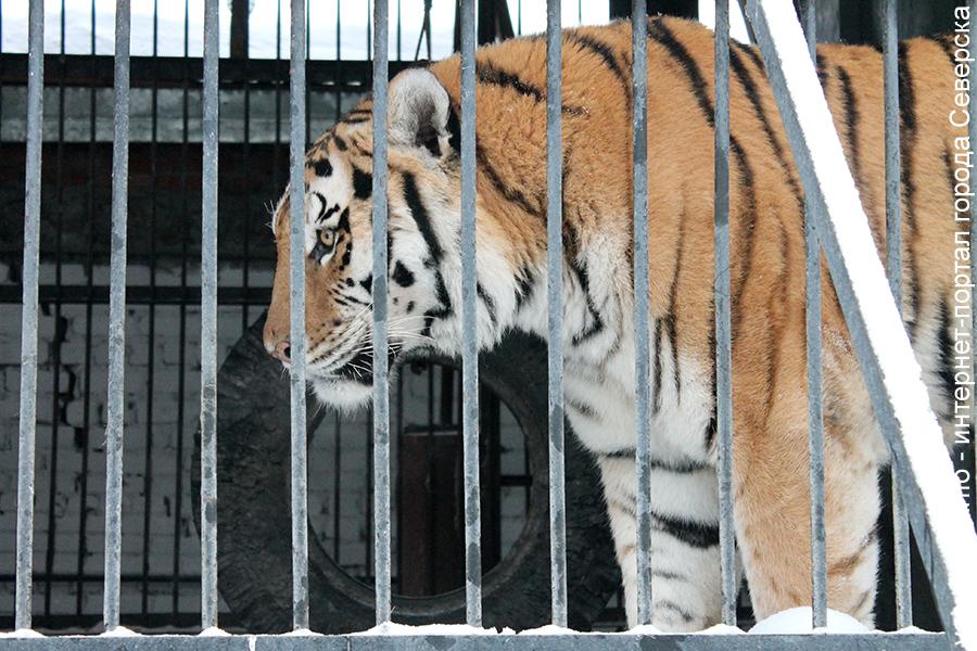 Животных в зоопарке в мороз будут кормить кроликами и мышами