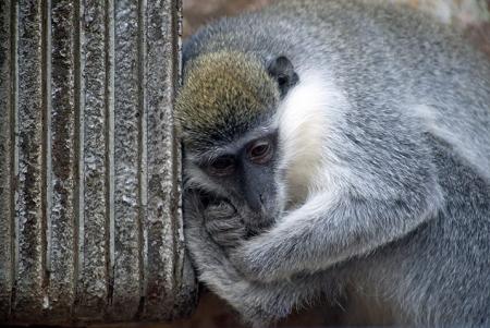 В зоопарке утеплили домики и греют пищу из-за аномальных морозов