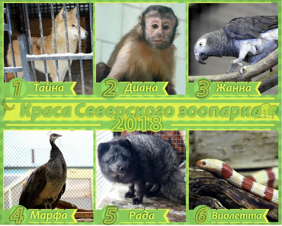 Стартовало голосование за звание «Краса Северского зоопарка 2018»