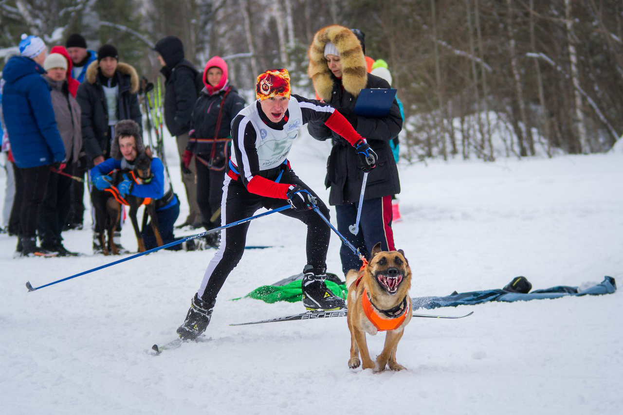На лыжной базе пройдут Всероссийские финалы по кинологическому спорту