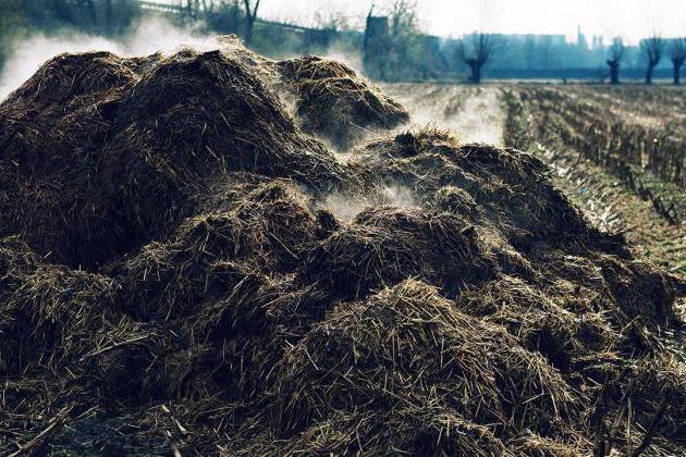 Россельхознадзор нашел пруды со сливами животноводческих отходов