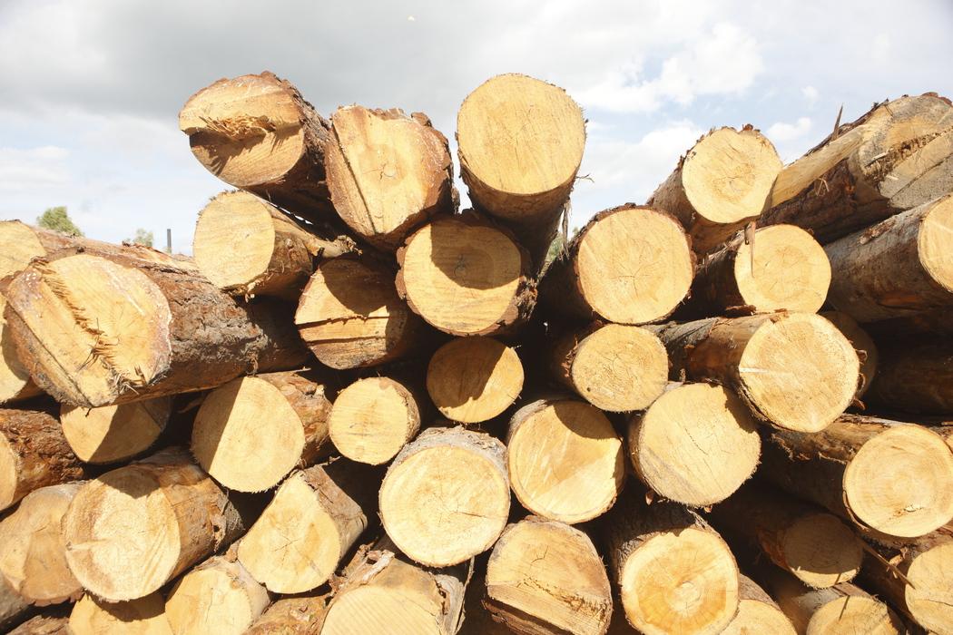 Экспорт древесины через Томскую таможню за год вырос на 28,4%