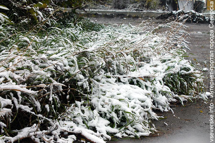 В Томской области ожидаются ночные заморозки