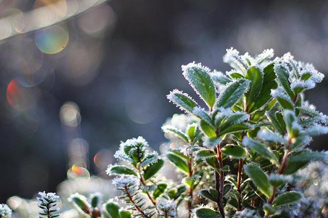 В ближайшие дни ожидаются заморозки