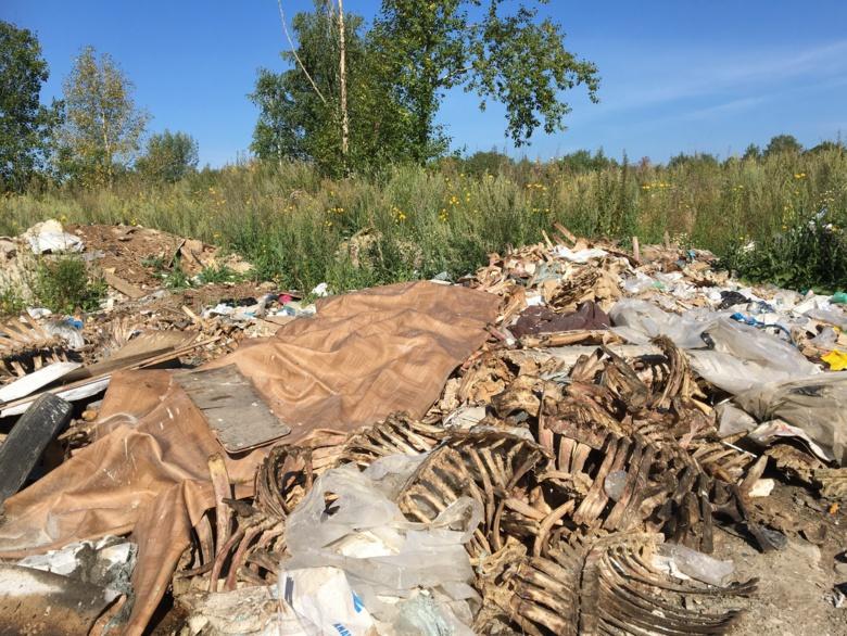 В лесном массиве Северска обнаружили свалку биологических отходов
