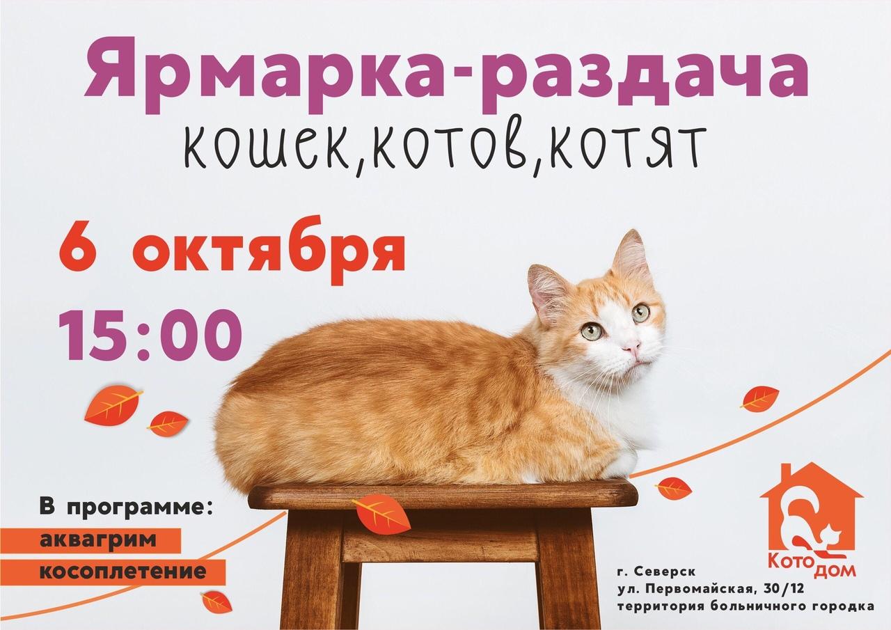 Осенняя ярмарка-раздача кошек