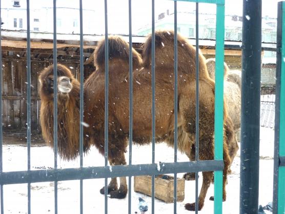 В зоопарке животных перевели на дробное питание из-за морозов