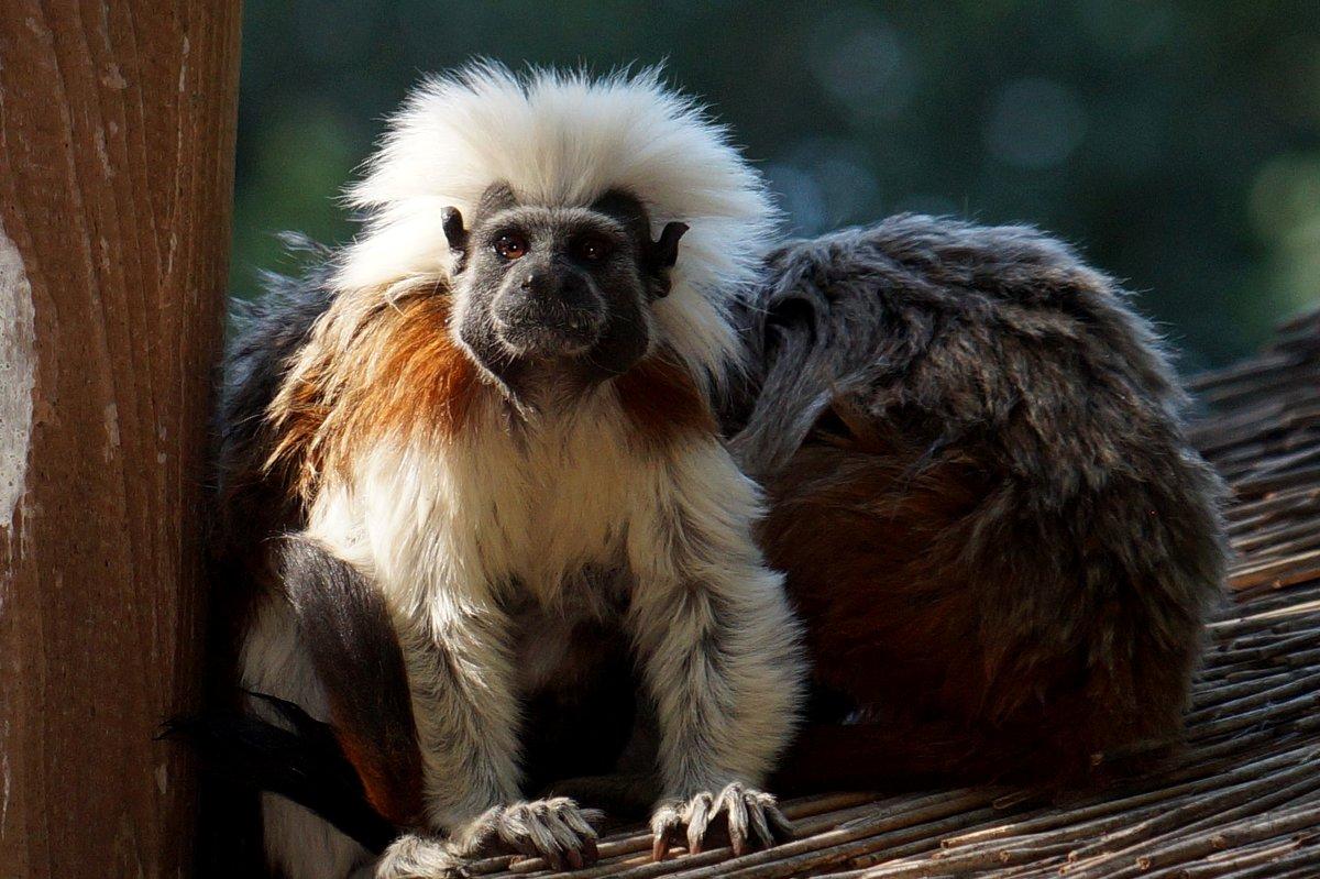 Новые экзотические жители зоопарка