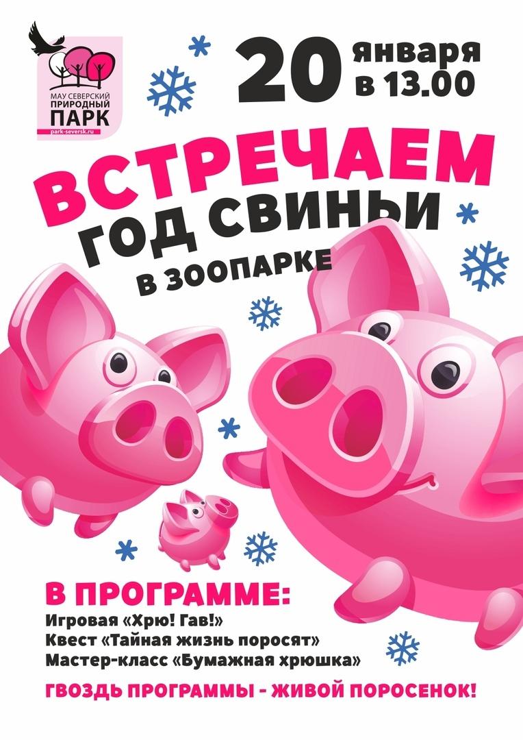 Встречаем год Свиньи!