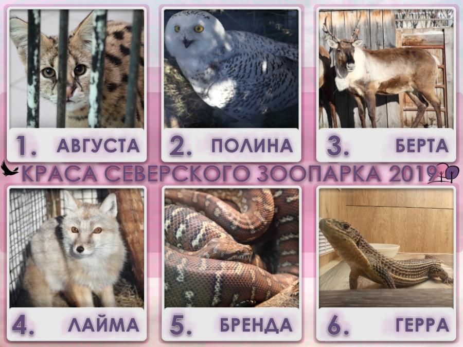 Голосование за красу Северского зоопарка 2019
