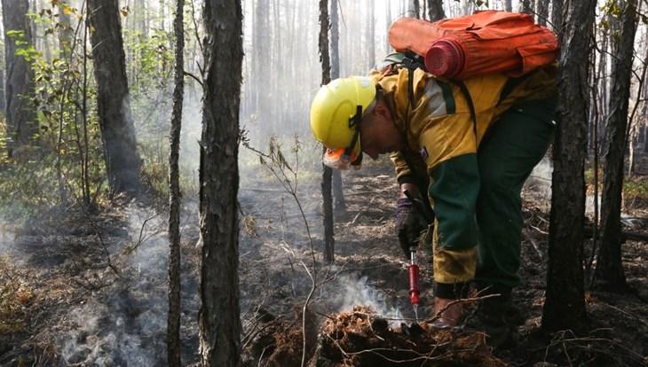 Эколог ТГУ: лесные пожары в Сибири с годами будут только усиливаться