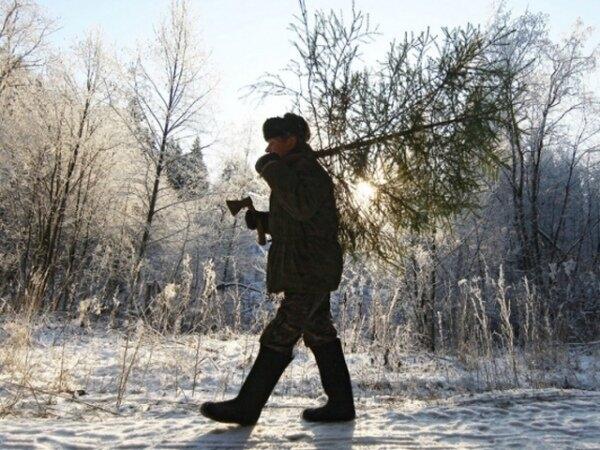 В Томской области усиливают охрану лесов в преддверии новогодних праздников