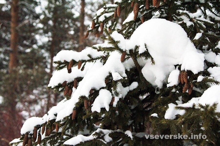 Снег и порывы ветра до 20 метров в секунду ожидаются в Томской области