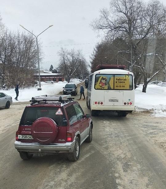 Автобус насмерть сбил собаку, которая перебегала дорогу