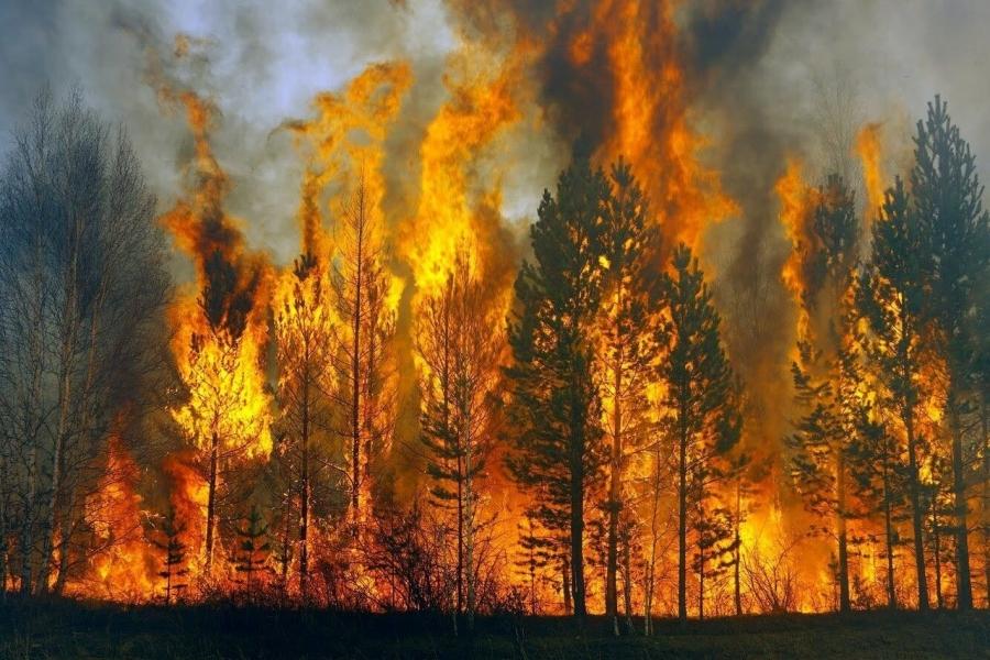 В Томской области ликвидировано 8 лесных пожаров