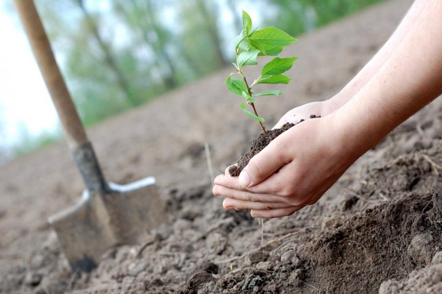 В Северске стартует ежегодная акция «Посади свое дерево!»