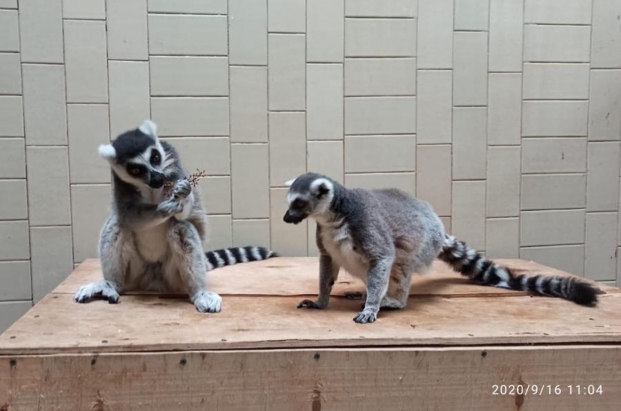 В Северском зоопарке поселились звери-иностранцы